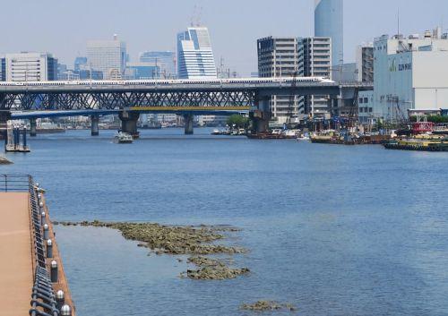 大井基地へ回送される700系新幹線 (2019年8月 天王洲アイル付近)