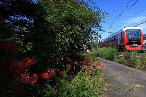 静岡鉄道は赤いA3002と彼岸花 (2019年10月 御門台-狐ヶ崎)
