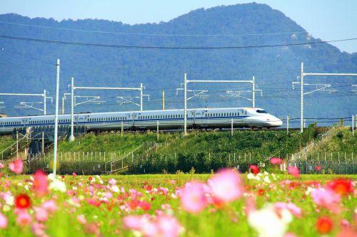 新幹線と秋桜畑